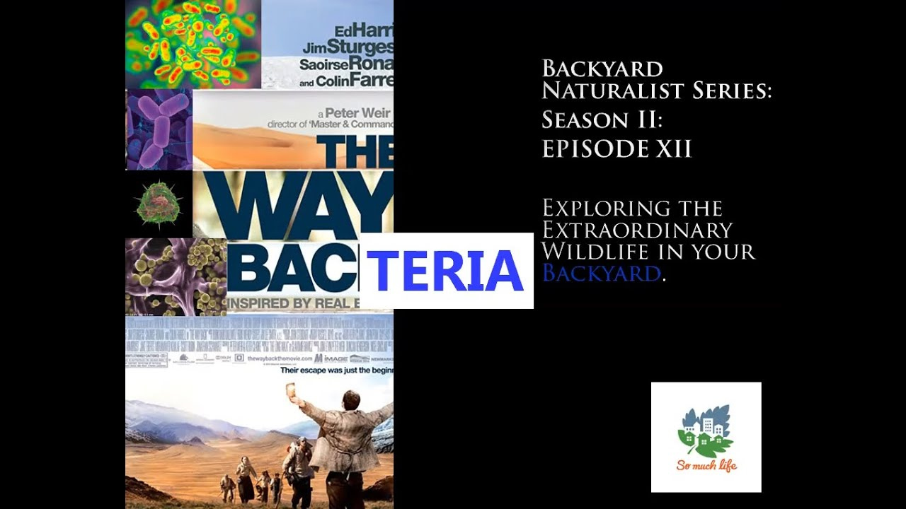 Backyard Naturalist Series, season 2, episode 12: The Way Bacteria
