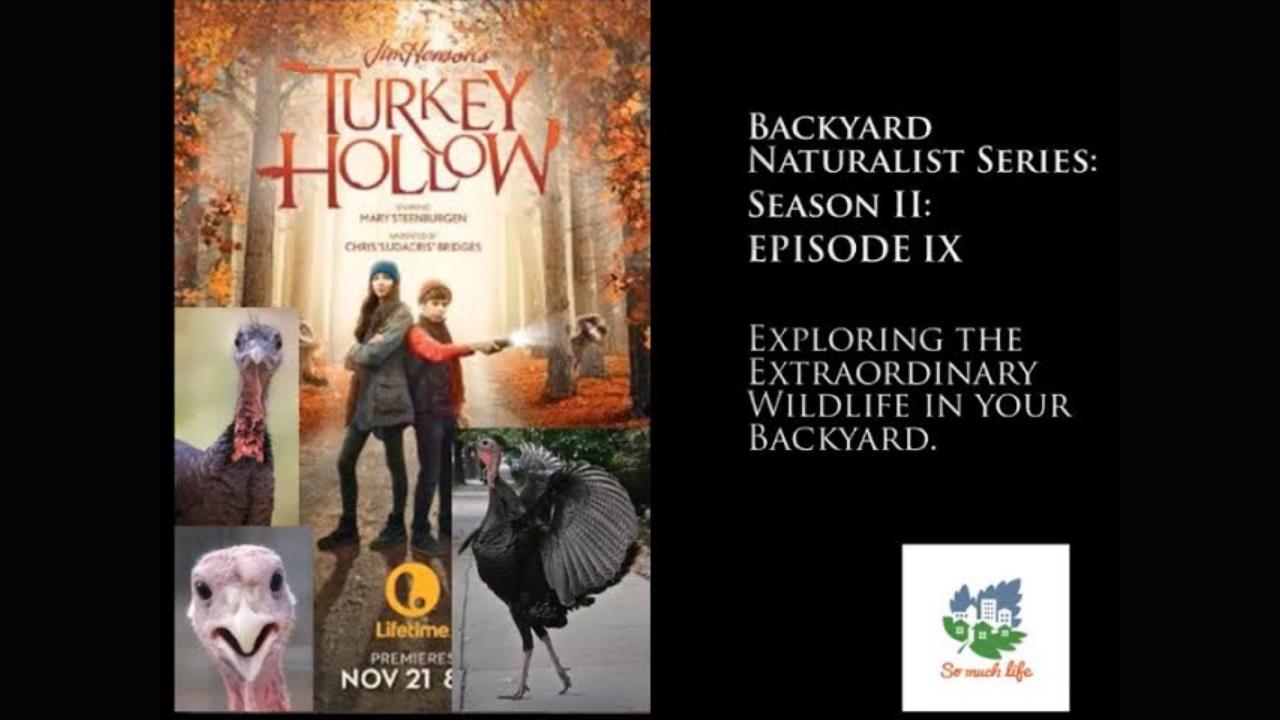 Backyard Naturalist Series, season 2, episode 9: Turkey Hollow