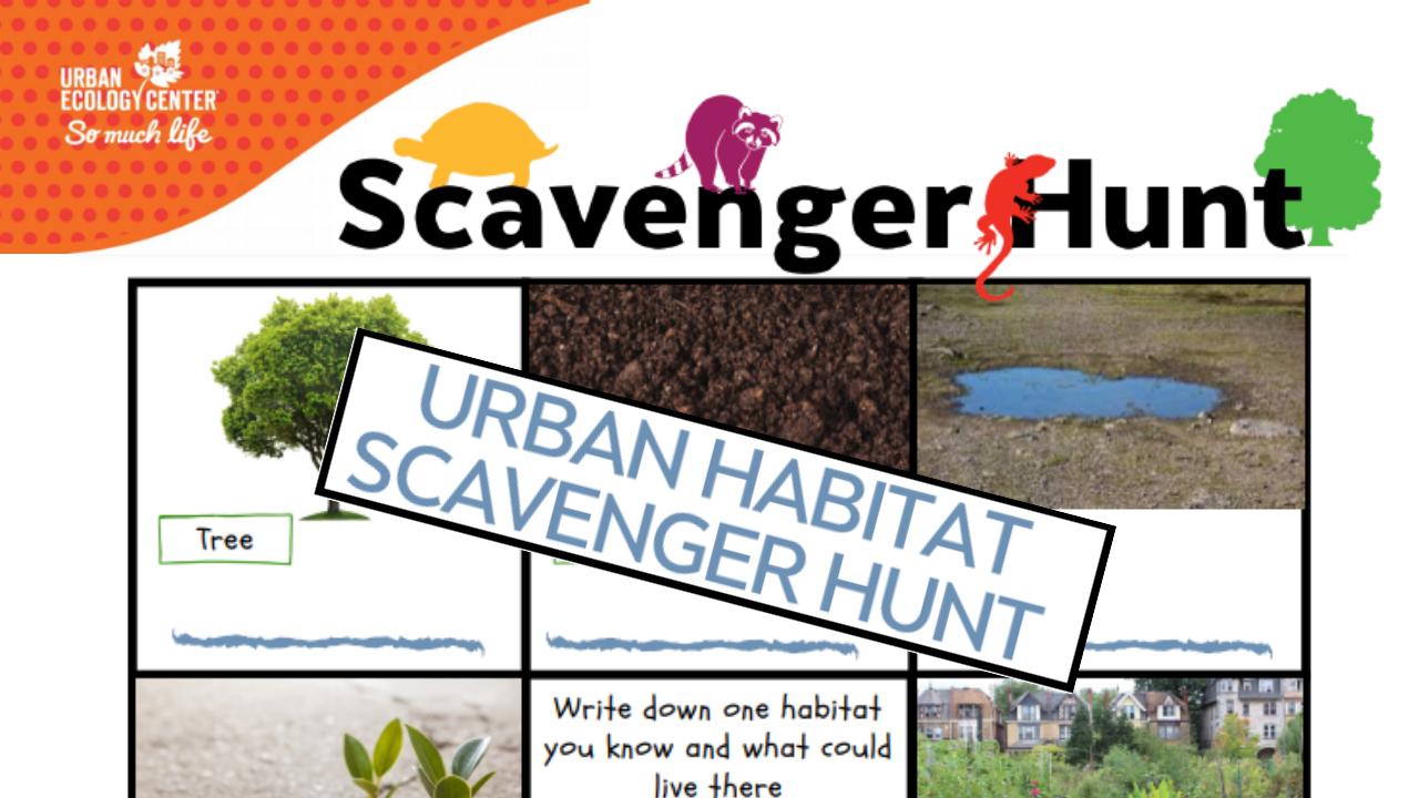 Scavenger Hunt: Urban Habitats