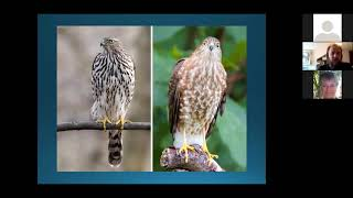 Most Commonly Misidentified Birds (Recorded Live Lecture)
