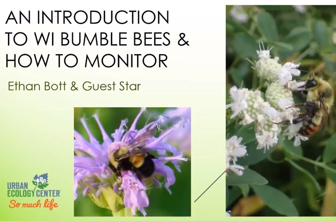 Community Science in Your Own Backyard: Documenting Bumble Bees