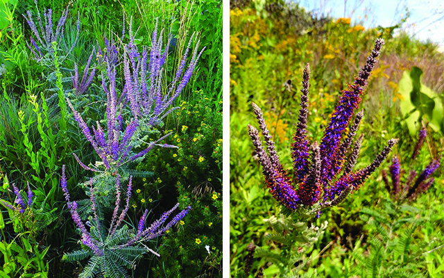 Leadplant blog colors