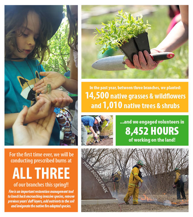 In the past year, between three branches, we planted: 14,500 native grasses & wildflowers and 1,010 native trees & shrubs...and we engaged volunteers in 8,452 HOURS of working on the land!  For the first time ever, we will be conducting prescribed burns at all three of our branches this spring! Fire is an important restoration management tool to knock back encroaching invasive species, remove previous years' duff layers, add nutrients to the soil and invigorate the native fire adapted species.