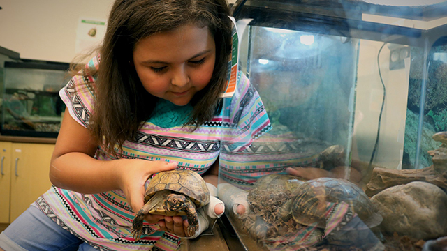 Analiese helping feed a turtle.