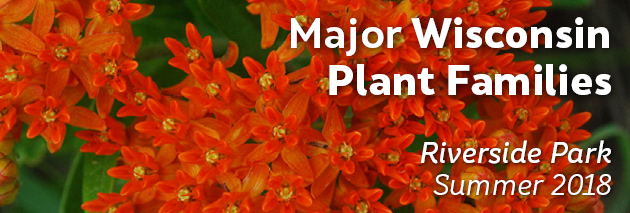 Major WI Plant Families