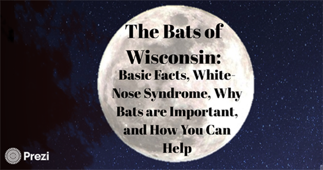 Learn more about the importance of Wisconsin's bats and conservation efforts in The Bats of Wisconsin