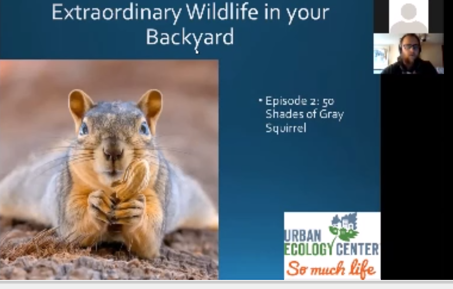Extraordinary Wildlife in Your Backyard. Season 1, Episode II: Fifty Shades of Gray Squirrel