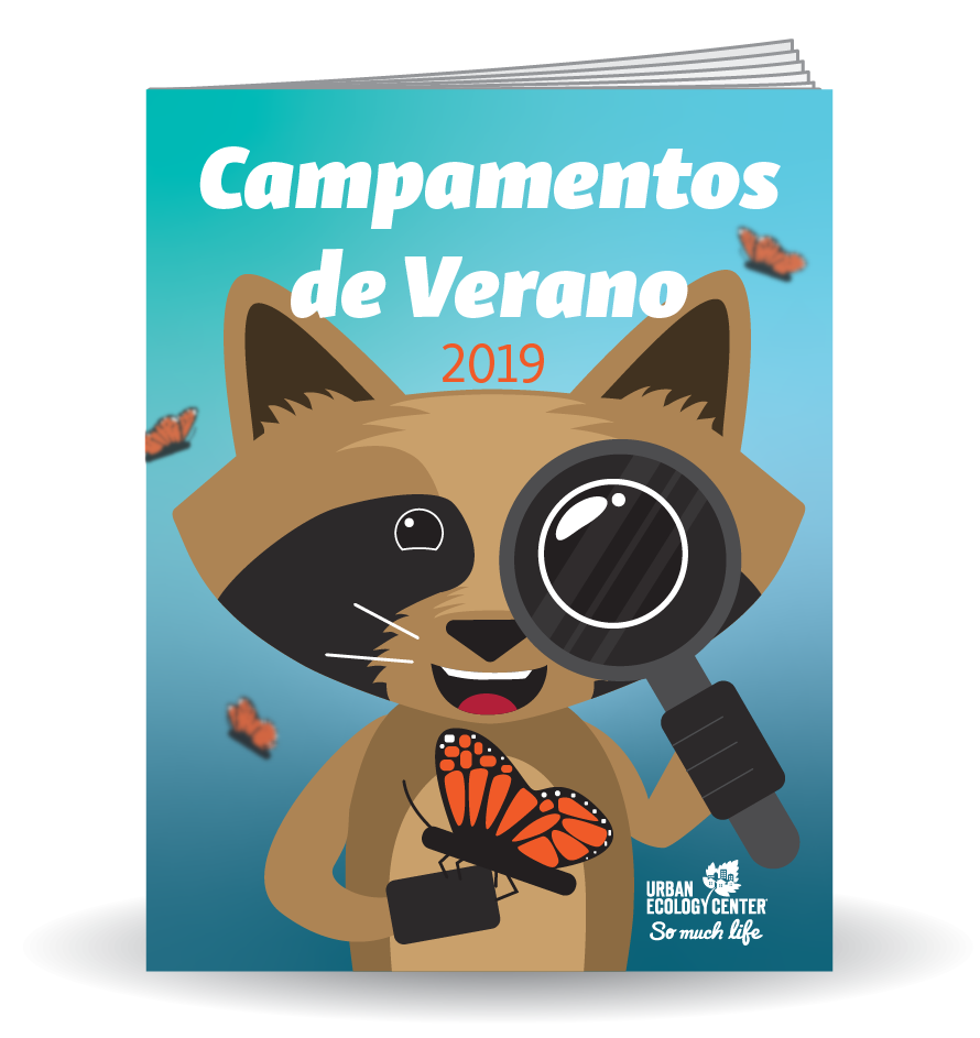 Enlace a pdf del folleto Summer Camp 2019