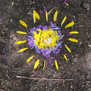 Sun made out of yellow and purple flowers.