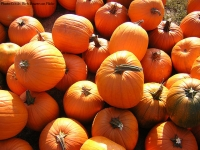 Pumpkins: More Than Just Decorations