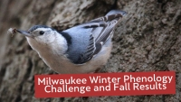 Milwaukee Winter Phenology Challenge and Fall Results