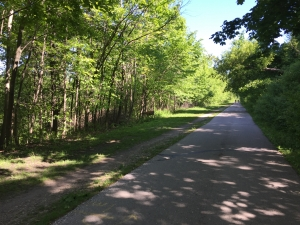 Improvements on the Oak Leaf Trail