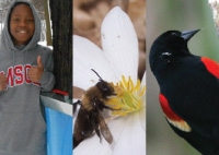 March Phenology 2013: Sap, Birds & Ephemeral Flowers
