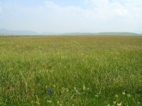 Plant Community Highlight: Prairie Ecological Succession