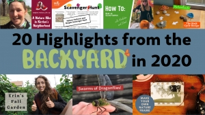 20 Highlights from the Backyard in 2020
