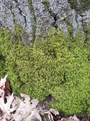 Look for bright green mosses