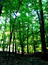 Natural Communities: Southern Mesic Forest