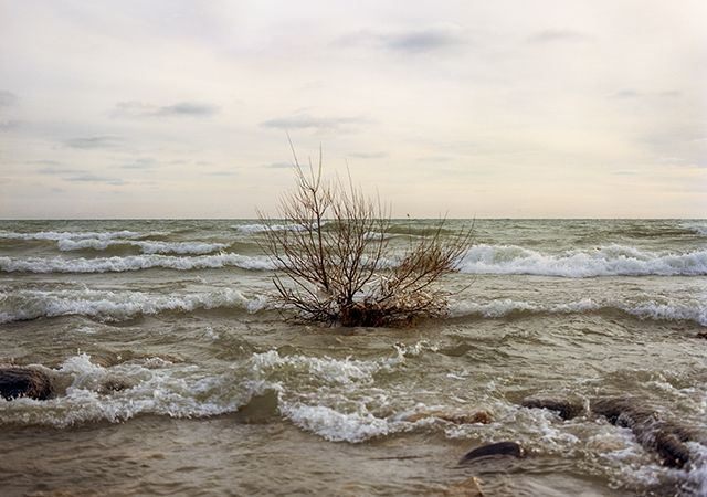Frozen Shrub, Harrington Beach State Park - Max CozziFebruary through May 2016 - Riverside ParkFrom the show